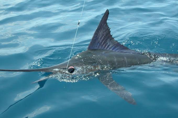 Pesca en Mazatlàn